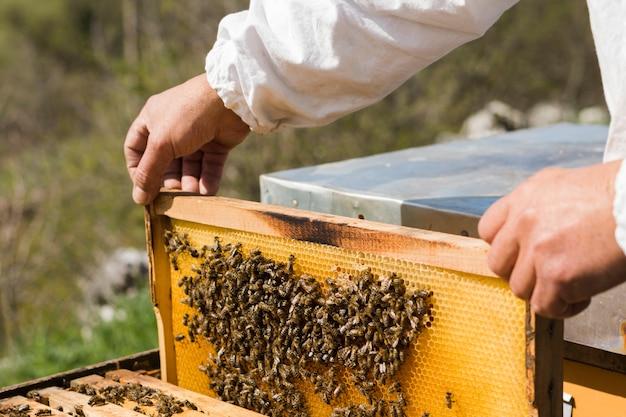 Apicultor extrayendo miel Foto gratis