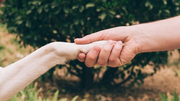 Apretón de manos de perro y hombre Foto gratis