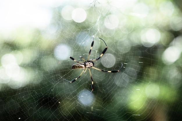 Araña exótica en primer plano web Foto gratis