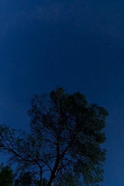 Árbol con cielo estrellado Foto gratis