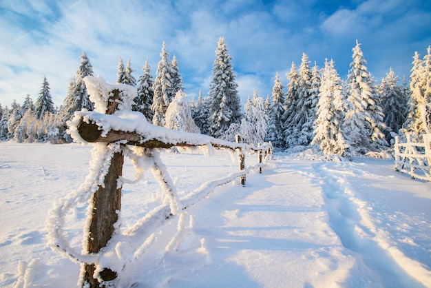 Árbol cubierto de nieve de invierno mágico Foto Premium