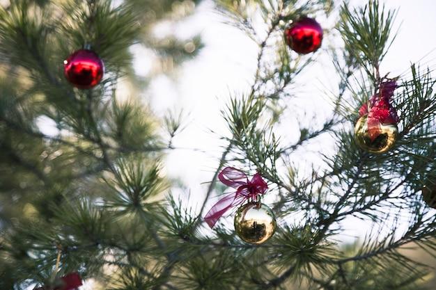 Rbol de navidad en la naturaleza con bolas de navidad - Bola de navidad con foto ...