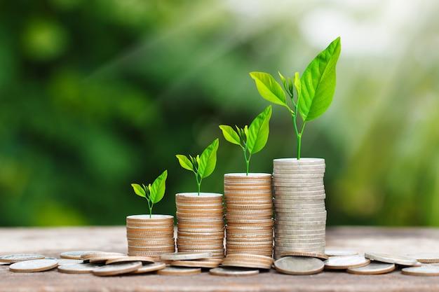 Árbol que crece en la pila de monedas con rayos de sol para ahorrar concepto de dinero Foto Premium