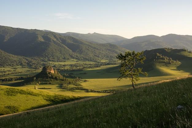 Un árbol rodeado de montañas. Foto Premium