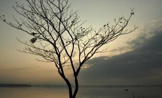 Arboles Secos Vectores árbol Seco árbol