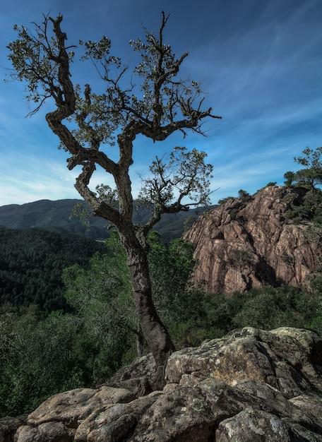 Un árbol solitario que sobrevive por encima de una roca antes de una formación rocosa y montañas lejanas, cielo nublado en españa Foto Premium