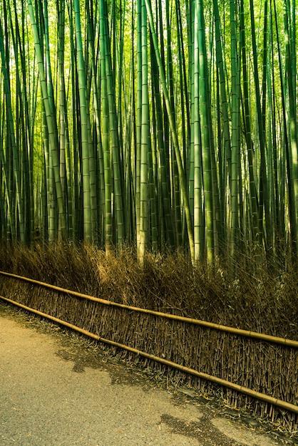 La Arboleda De Bambu De Arashiyama Estilo Japones Del Jardin De - Jardin-bambu