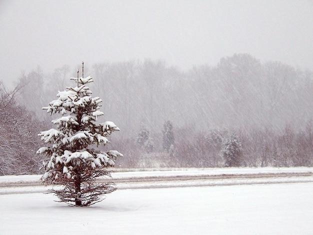 Rboles de navidad navidad nieve invierno descargar - Arbol navidad nieve ...