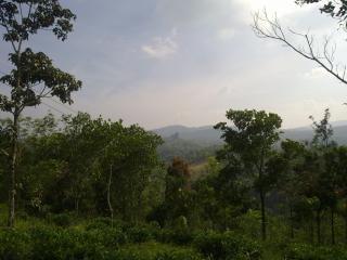 Rboles de plantas forestales descargar fotos gratis for Plantas forestales