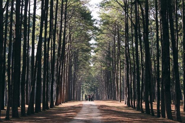 Árboles forestales boscosos iluminados por la luz del sol de oro antes de la puesta del sol con rayos de sol vertiendo a través de árboles en el suelo del bosque iluminando las ramas de los árboles. vintage efecto estilo imágenes. Foto gratis