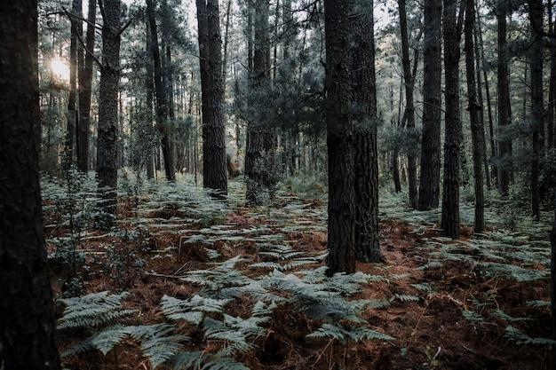 Árboles y helechos crecen en el bosque Foto gratis