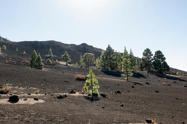 Rboles de hoja perenne en suelo volc nico descargar for Arboles de hoja perenne para clima continental