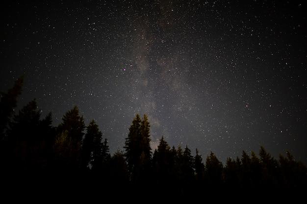 Árboles negros en una noche estrellada de otoño Foto gratis