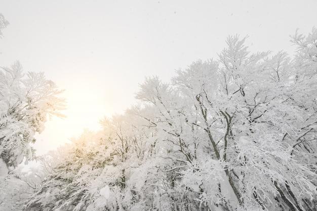 Árboles de trineo cubierta de abeto de montaña Foto gratis