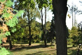 Rboles verdes arbustos de jard n descargar fotos gratis Arbustos de jardin