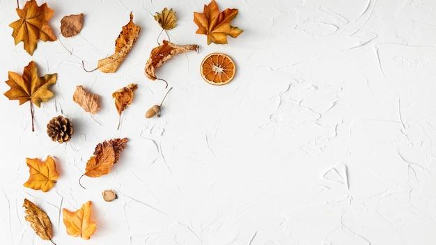 Arreglo de hojas secas sobre fondo blanco. Foto gratis