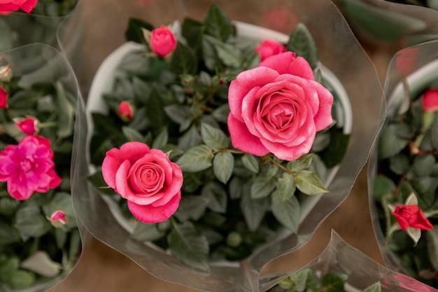 Arreglo plano con rosas rosadas Foto gratis