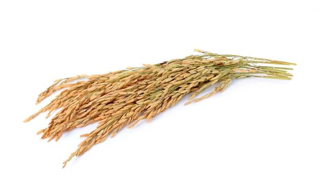 Arroz de arroz jazmín sobre fondo blanco Foto Premium