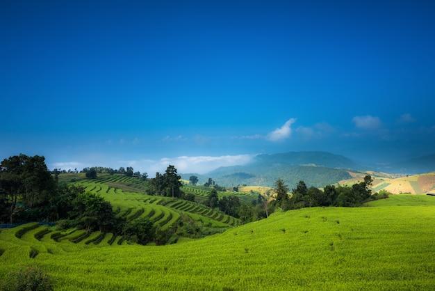Arrozales Con Terraza Tierras De Cultivo En La Colina