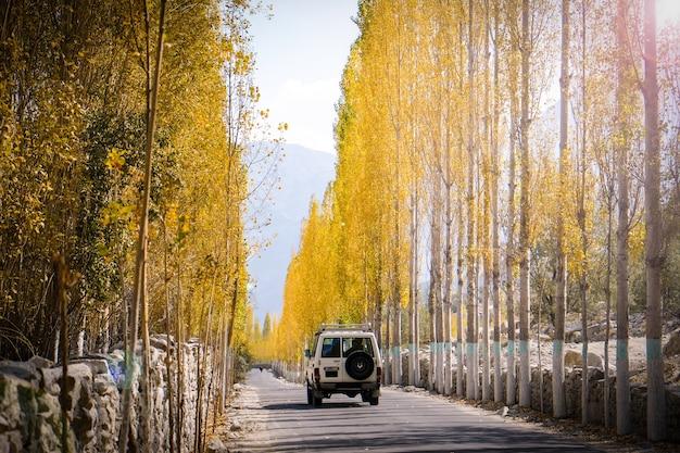 Un automóvil corre en el camino hacia khaplu entre las hojas amarillas de los álamos en otoño. Foto Premium