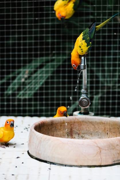 Aves bebiendo agua de una fuente Foto gratis