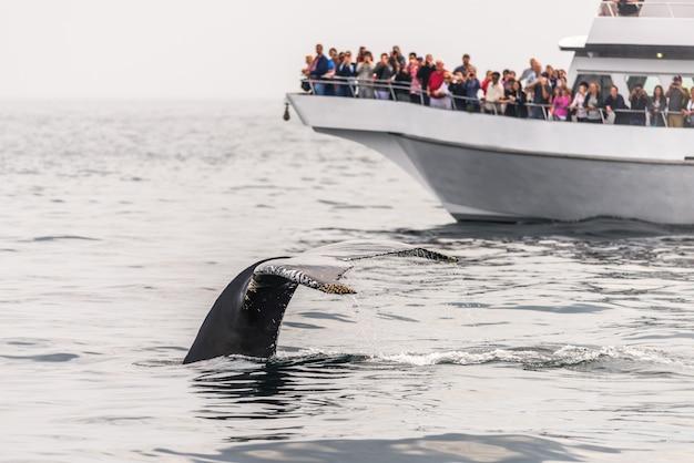 Avistamiento de ballenas en el océano Foto Premium