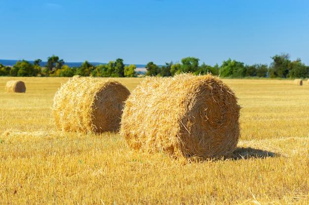 Balas de heno dorado en campo | Foto Premium