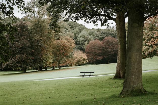 Banco individual en un parque junto a un árbol Foto gratis