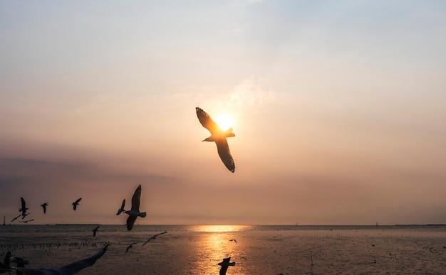 Bandada de gaviotas volando en el cielo. Foto gratis