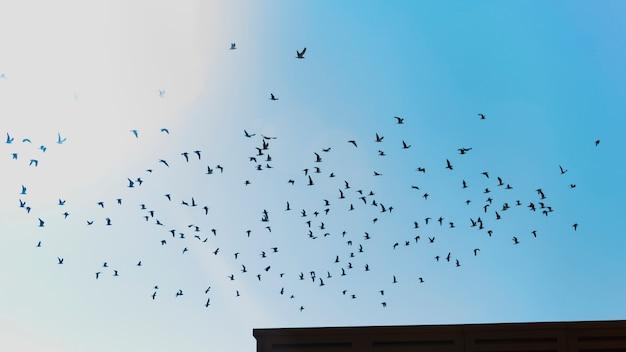 Bandada de pájaros volando Foto gratis