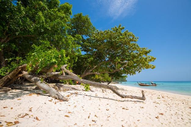 Barco de cola larga en playa tropical, krabi, tailandia Foto gratis