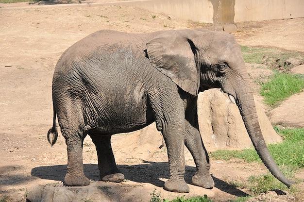 Beb animales frica zool gico elefante elefantes - Fotos de elefantes bebes ...