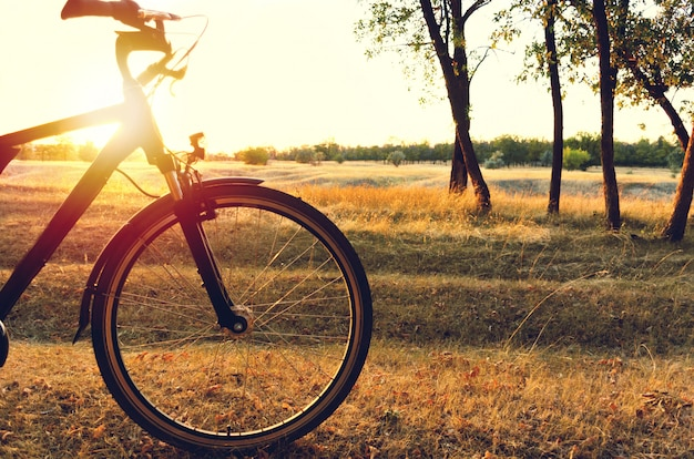 Bicicleta en el bosque de otoño al atardecer. Foto Premium