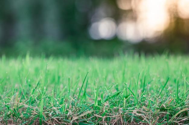 Bokeh de fondo borroso de hierba verde s Foto Premium
