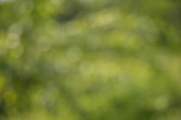 Bokeh de hojas de los árboles para el fondo de la naturaleza Foto Premium