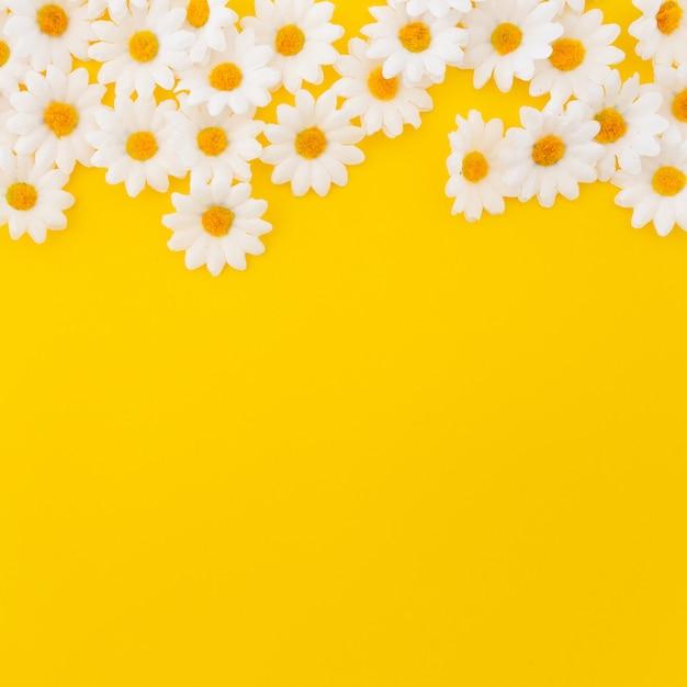 Bonitas margaritas sobre fondo amarillo con copyspace en la parte inferior Foto gratis