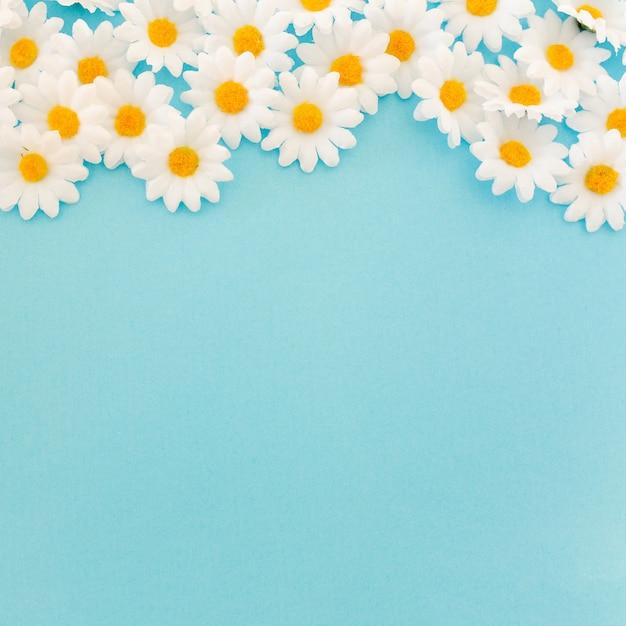 Bonitas margaritas sobre fondo azul con espacio en la parte inferior Foto gratis