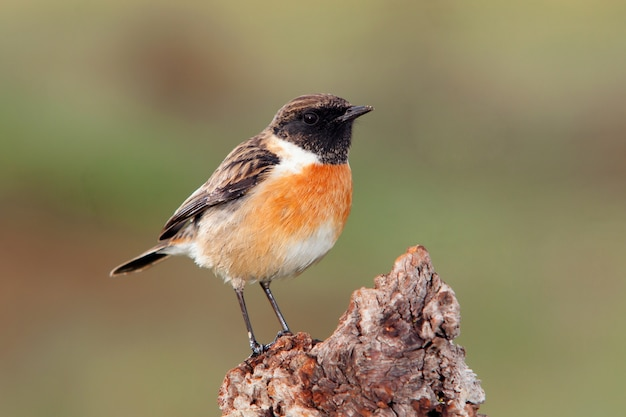 Bonito pájaro en un tronco posadero Foto Premium