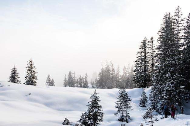 Bosque de abetos durante el invierno cubierto de nieve Foto gratis