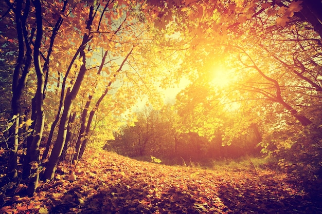 Resultado de imagen para bosques fotos libres de derechos de autor