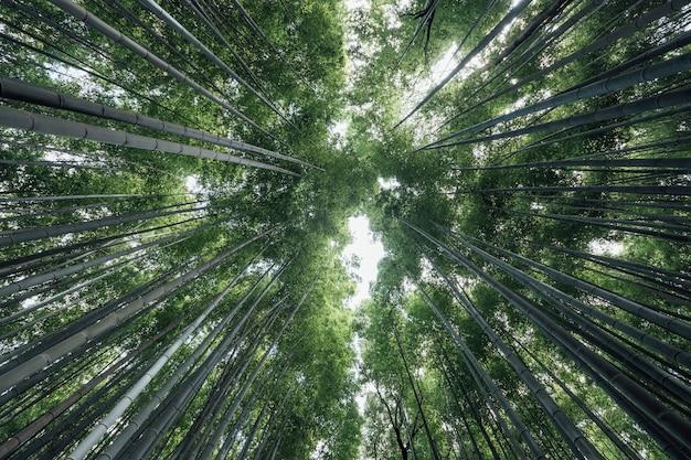 Bosque de arboledas de bambú de arashiyama en japón Foto gratis