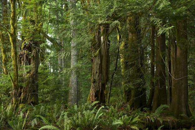 Bosque de la columbia británica Foto gratis
