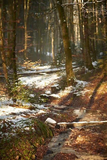 Bosque cubierto de nieve bajo la luz solar durante el invierno Foto gratis