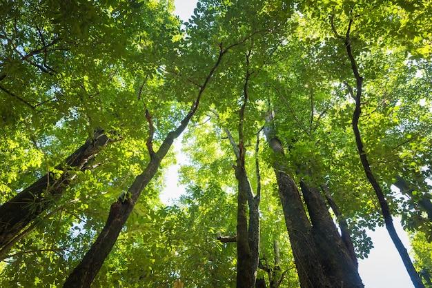 Bosque de hoja perenne rboles de alto ngulo de vista for Arboles para veredas hojas perennes