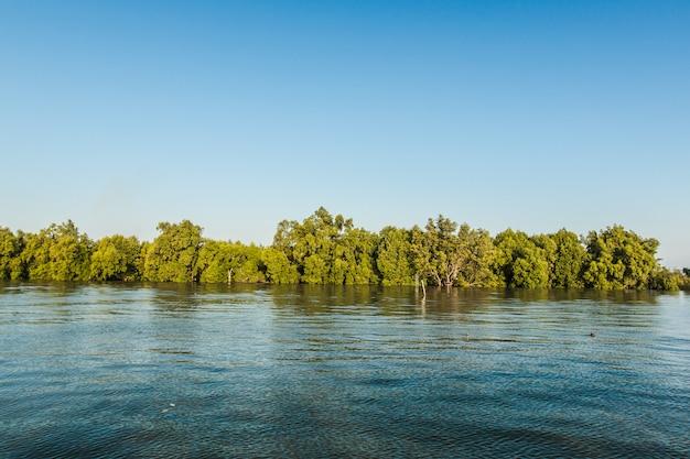 Bosque de manglares en el golfo de tailandia Foto Premium