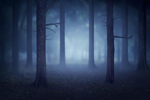 Bosque con muchos árboles y niebla. Foto Premium