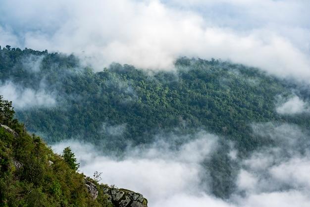 Bosque y nube en la cima de la montaña Foto gratis