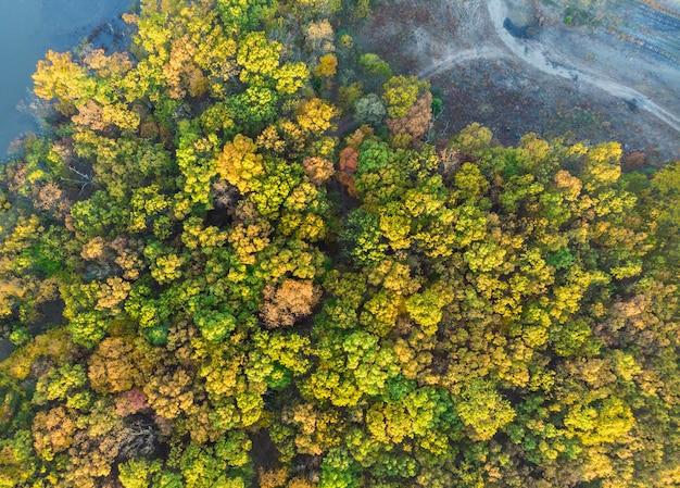 Bosque del otoño con vista aérea de los árboles amarillos y rojos. Foto Premium