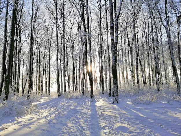 Bosque rodeado de árboles cubiertos de nieve bajo la luz del sol en larvik en noruega Foto gratis