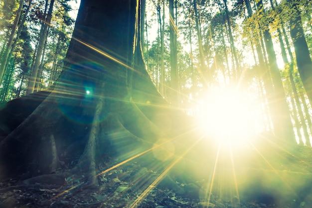 Bosque selvático Foto gratis